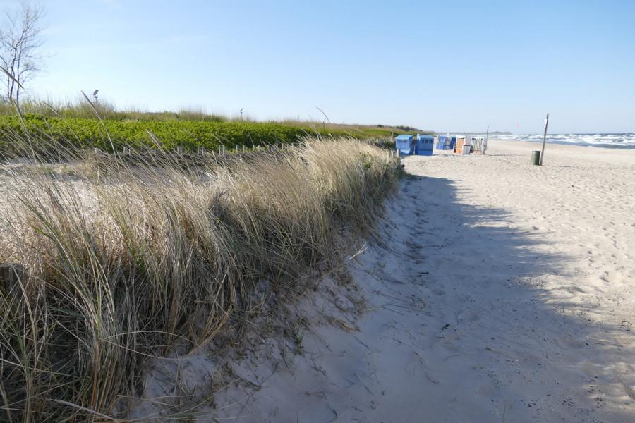 Strandduene an der Ostsee
