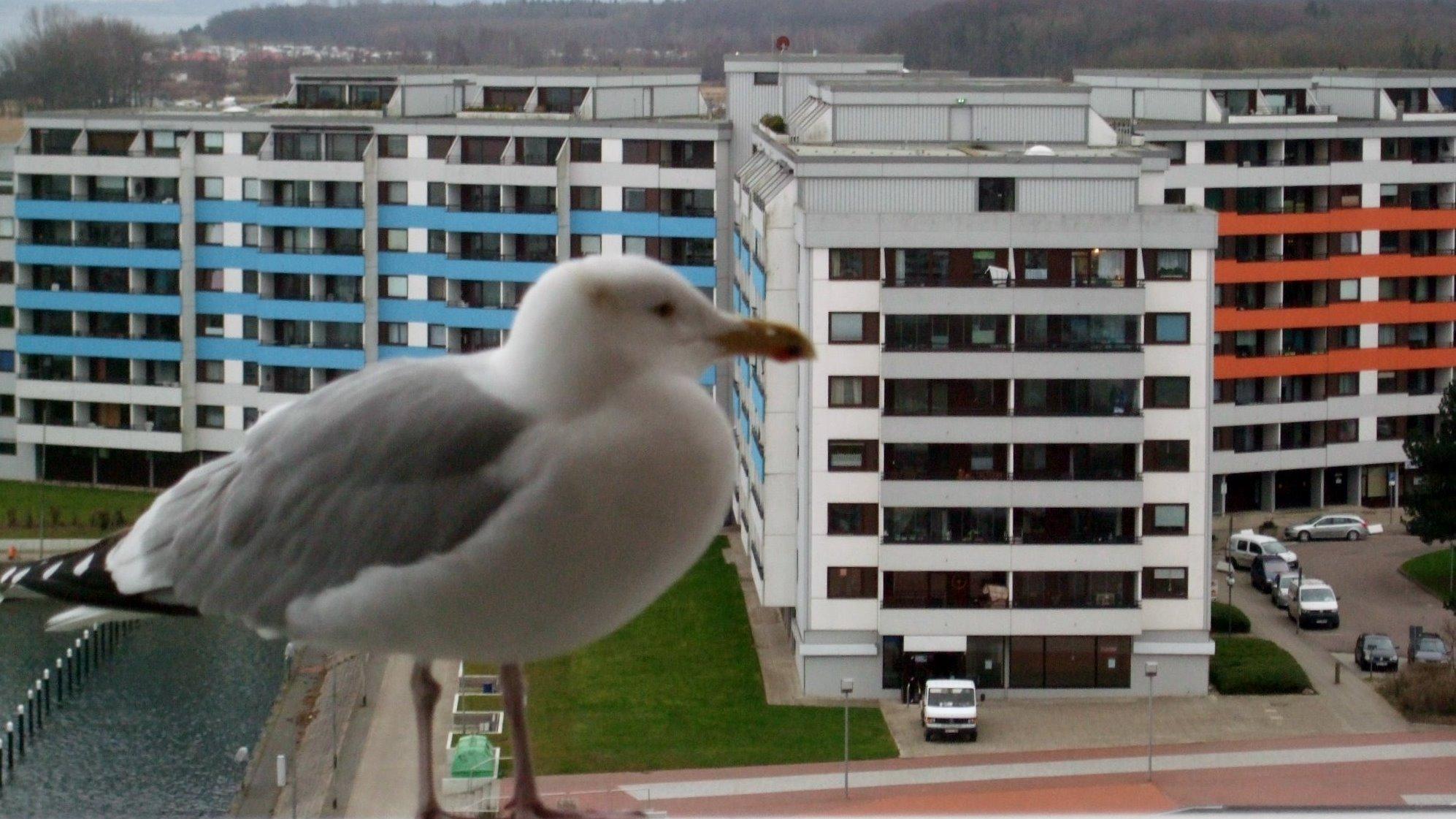 Möwe an der Ostsee In Damp